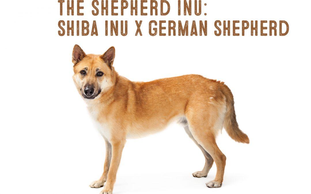 Shiba Inu German Shepherd Mix Information