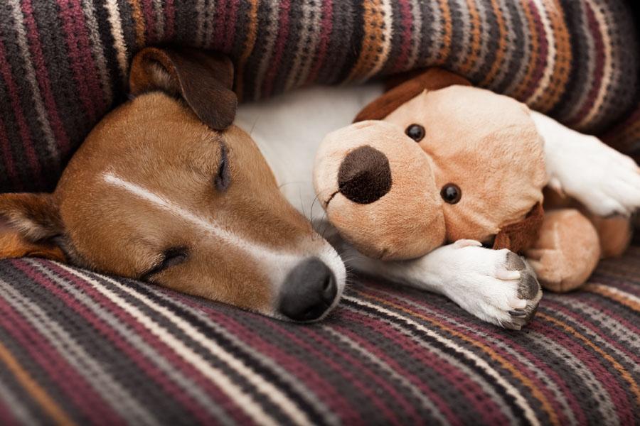 dog sleeping with blanket