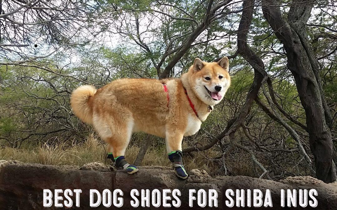 image of shiba inu wearing dog shoes