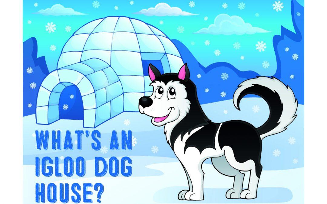 What's an Igloo Dog House?
