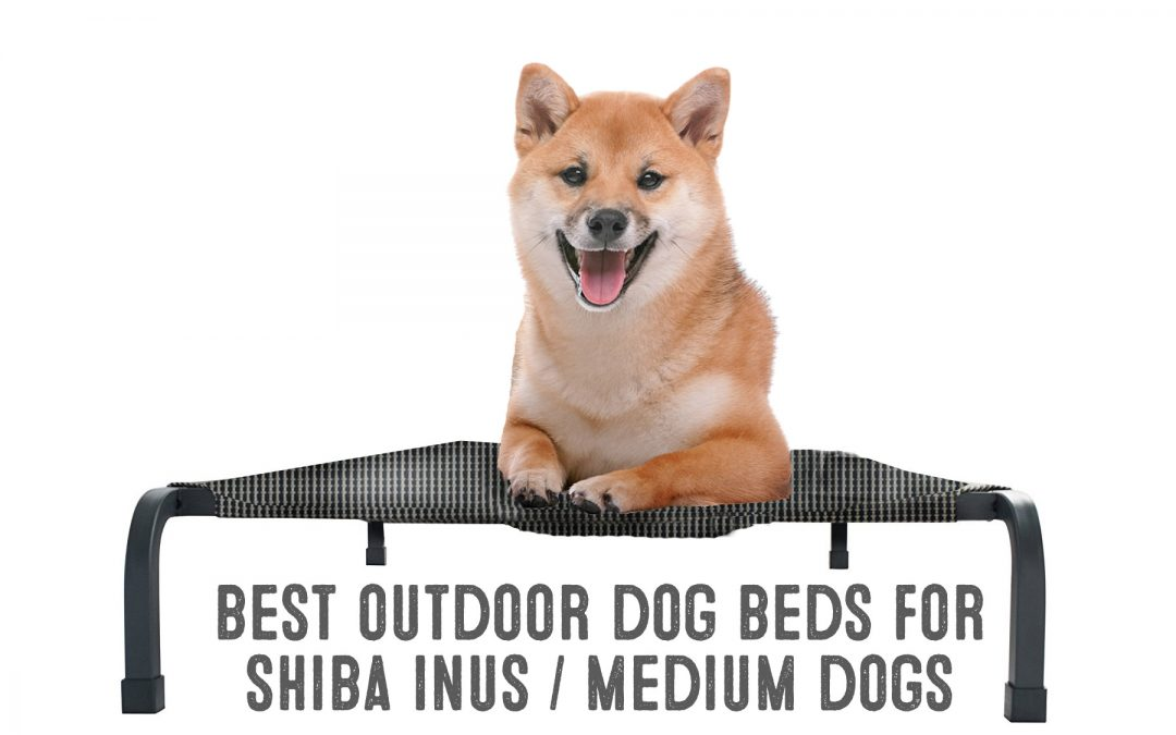 Best Outdoor Dog Beds For Shiba Inus