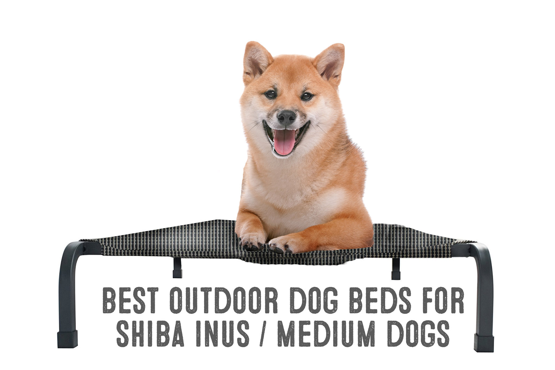 best outdoor dog bed for shiba inus
