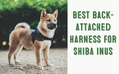 Best Back Attached Harnesses For Shiba Inus
