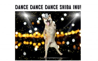 Why Do Shiba Inus Dance?