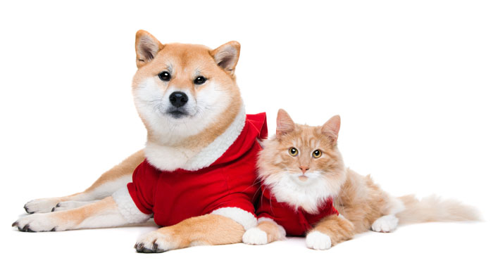 shiba inu with cat friend