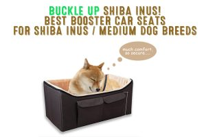 dog booster car seats for shiba inus