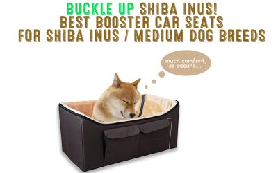 Buckle Up Shibas! Best Car Booster Seats For Shiba Inus, Medium Dogs