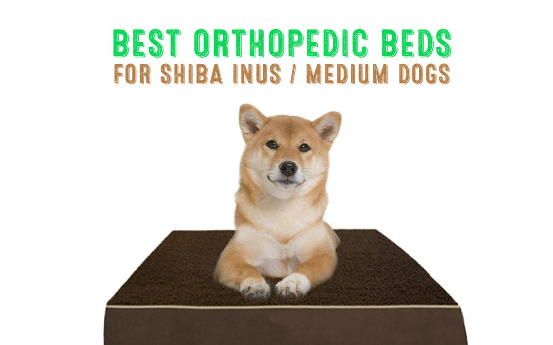 Best Orthopedic Dog Beds for Shiba Inus / Medium Dog Breeds