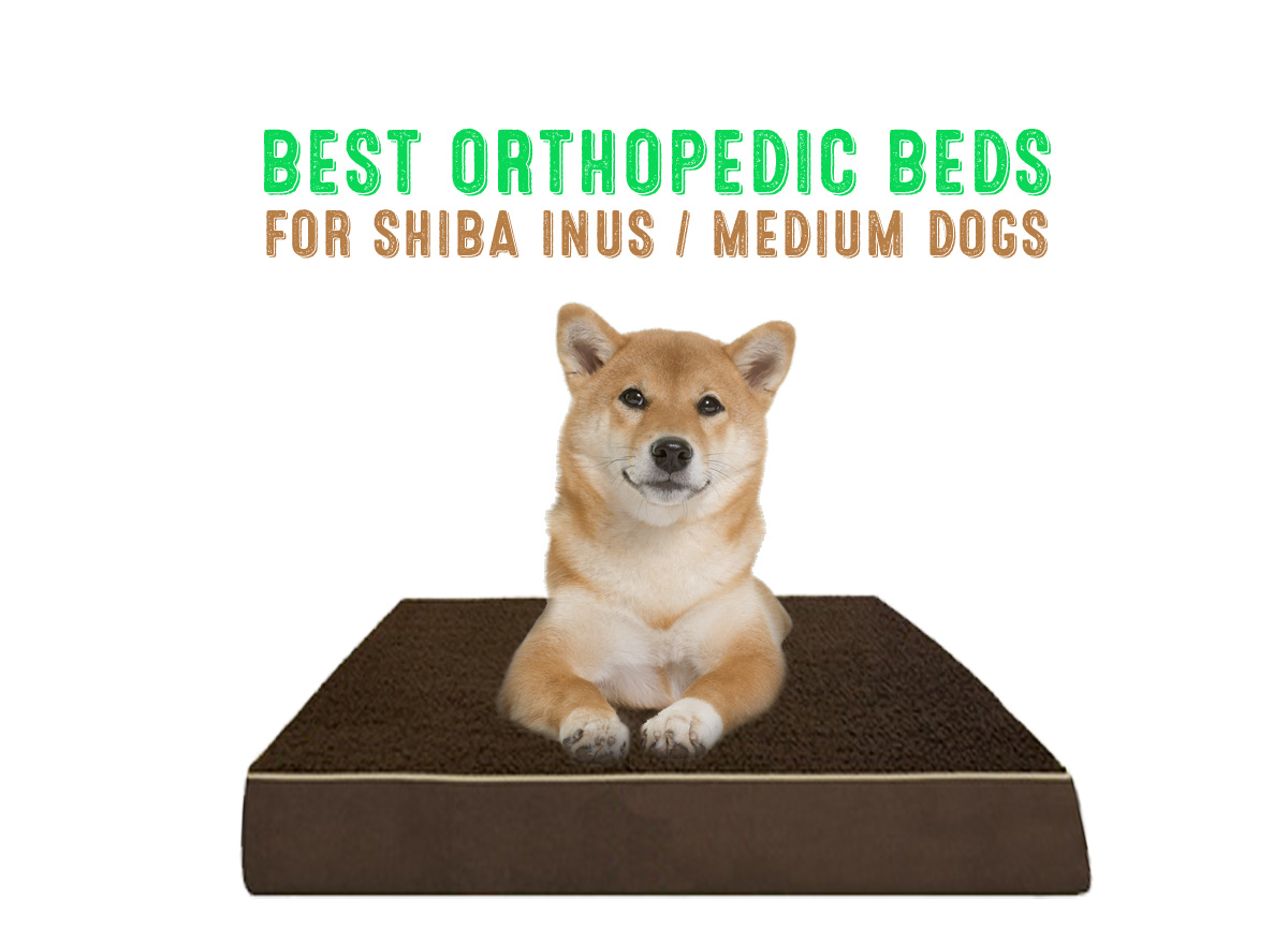 orthopedic dog bed shiba inu