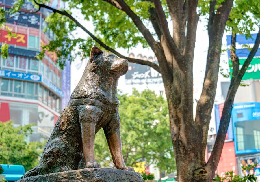 célèbre statue akita Hachiko