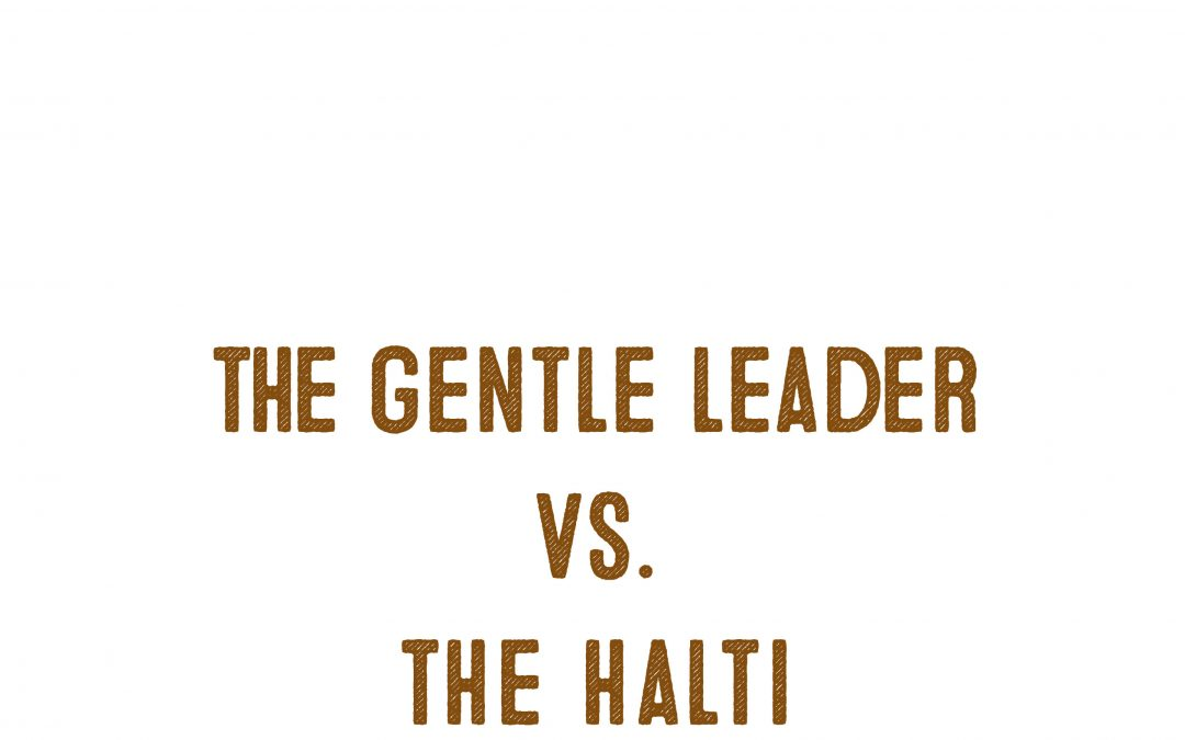 Halti Vs. Gentle Leader – Which Head Collar Works Best?