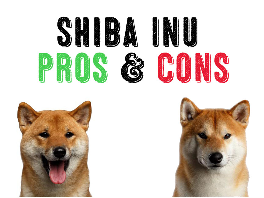 Shiba Inu – The Pros And The Cons