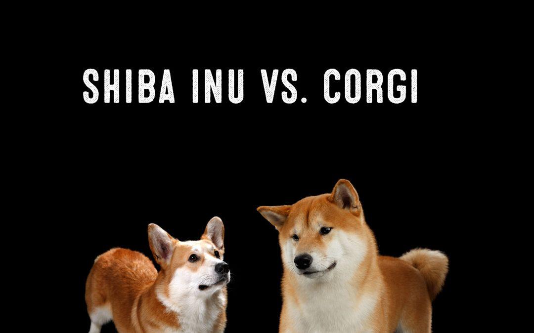 Shiba Inu Vs. Corgi