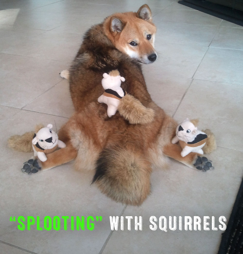 splooting with squirrels