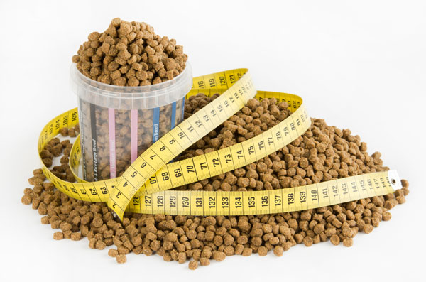 measured amount of dog food