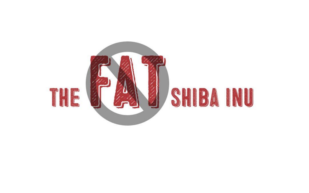 The Fat Shiba Inu And Why Dog Obesity Is Not Cute