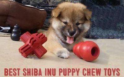 Shiba Inu Puppy Chew Toys – The 10 Best To Chew On