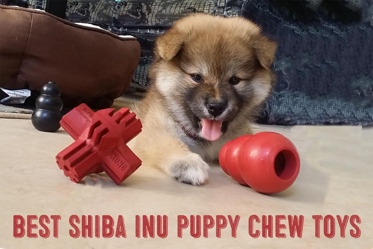 shiba inu puppy chew toys