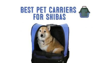 Best Pet Carrier For Shiba Inus / Medium Dogs