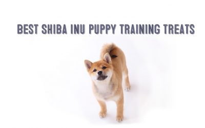 The Best Puppy Training Treats For Shiba Inu Puppies