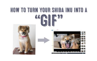 How To Turn Your Shiba Inu Into a GIF