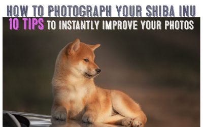 How To Photograph Your Shiba Inu Like a Pro