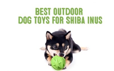 Best Outdoor Dog Toys For Shiba Inus / Fun-Loving Dogs