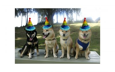 The Ultimate Shiba Inu Birthday Party Guide