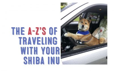 The A-Z's of Traveling With Your Shiba Inu