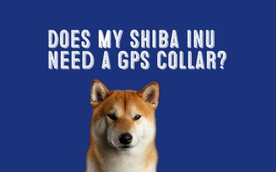 Are GPS Dog Collars a Good Investment for My Shiba Inu?