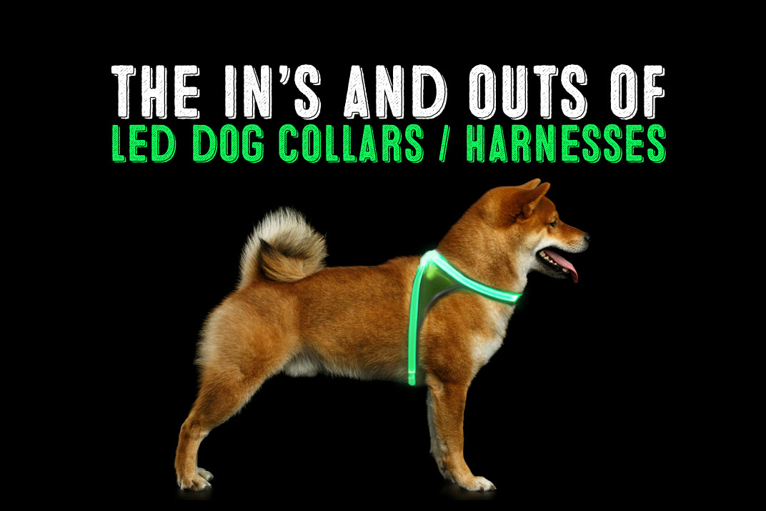 led dog harness on shiba inu