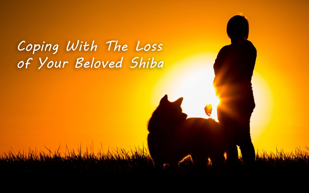 Coping With The Loss of Your Beloved Shiba Inu