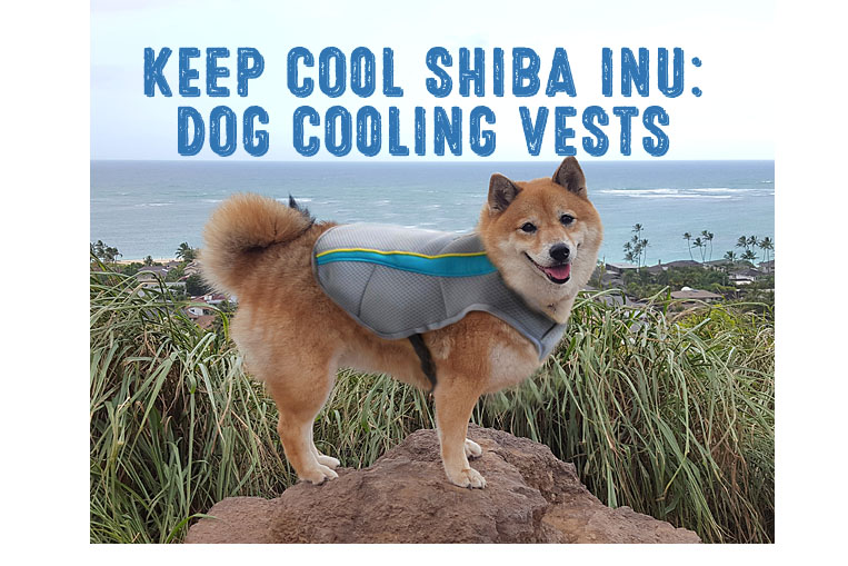 How to Choose the Best Dog Cooling Vest for Your Shiba Inu