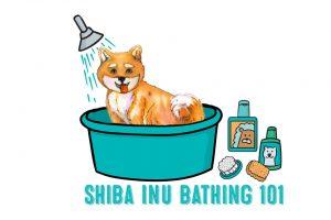 shiba inu bathing secrets