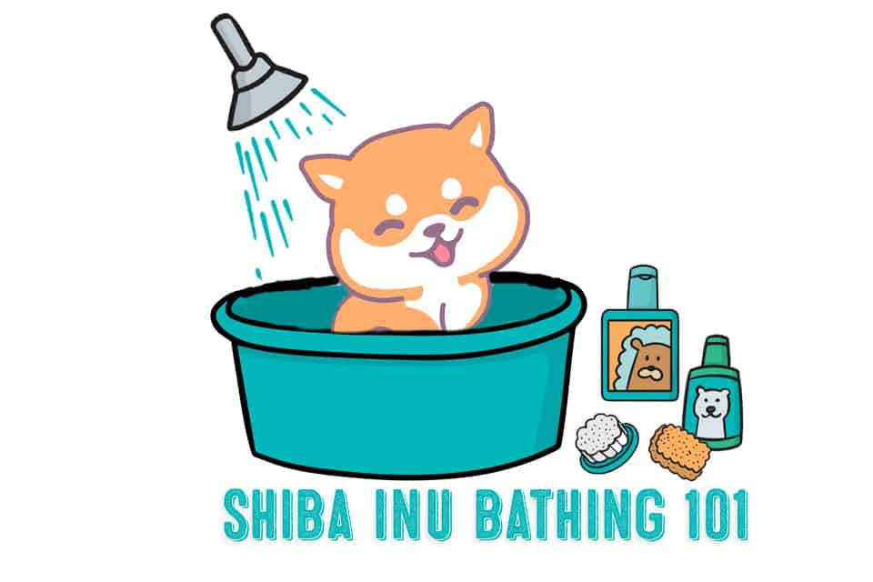 Secrets of The Elusive Shiba Inu Bath – Shiba Inu Bathing Tips and Tricks