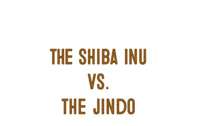 The Japanese Shiba Inu Vs. The Korean Jindo Dog