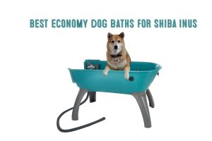 shiba inu in booster bath dog bath