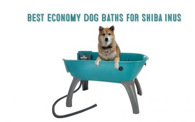 Best Dog Bath Tubs For Shiba Inus / Small-Medium Dogs