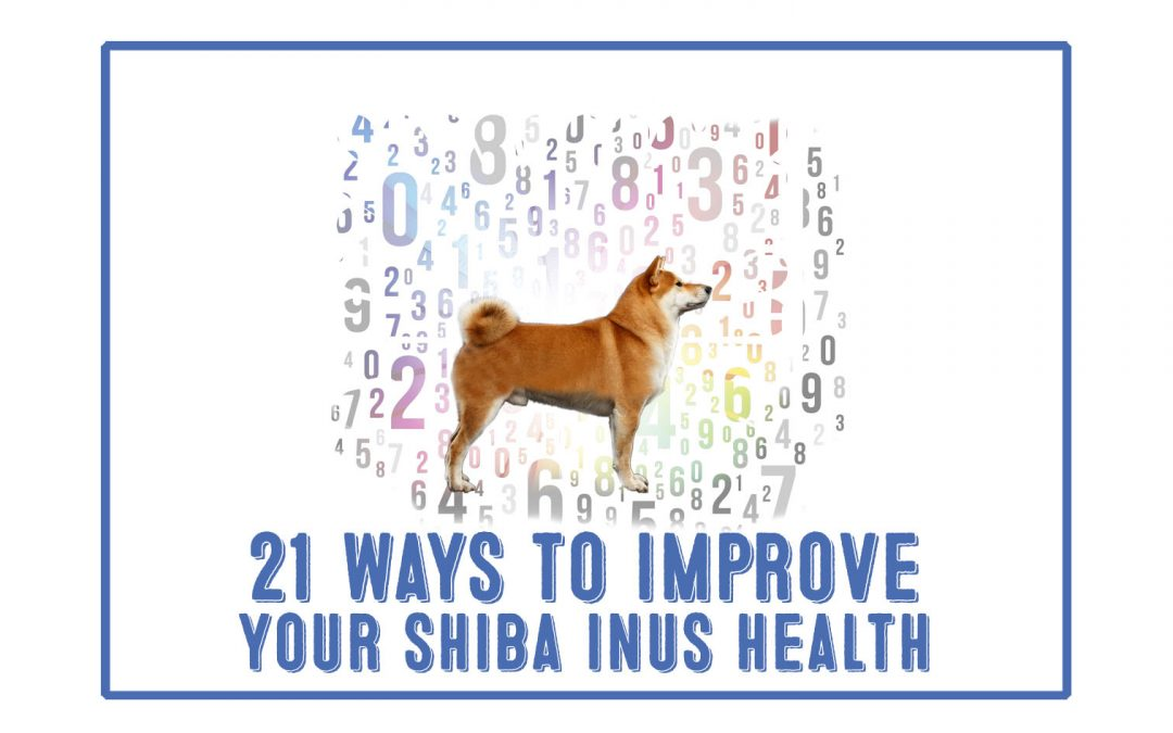 [ 21 Actionable Ways ]To Extend Your Shiba Inus Life