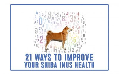 21 Ways To Help Your Shiba Inu Live Longer, Happier and Healthier