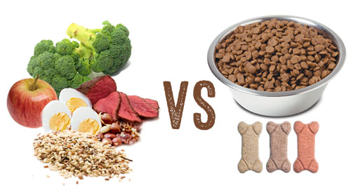 fresh dog food vs commercial dog food
