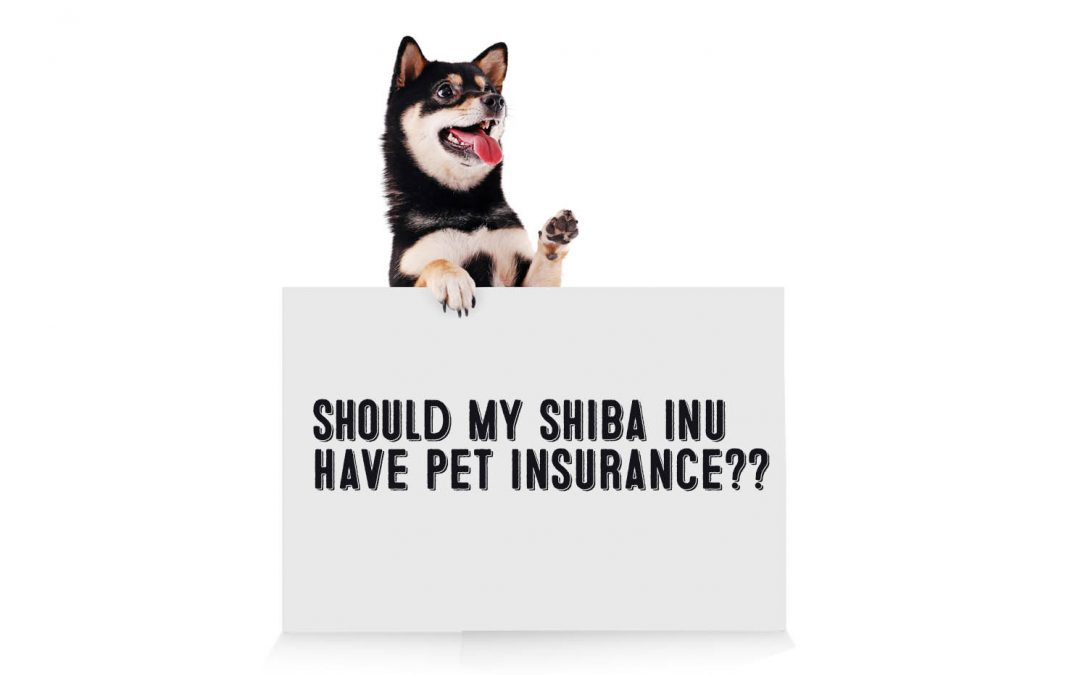 Should I Get Pet Insurance For My Shiba Inu?