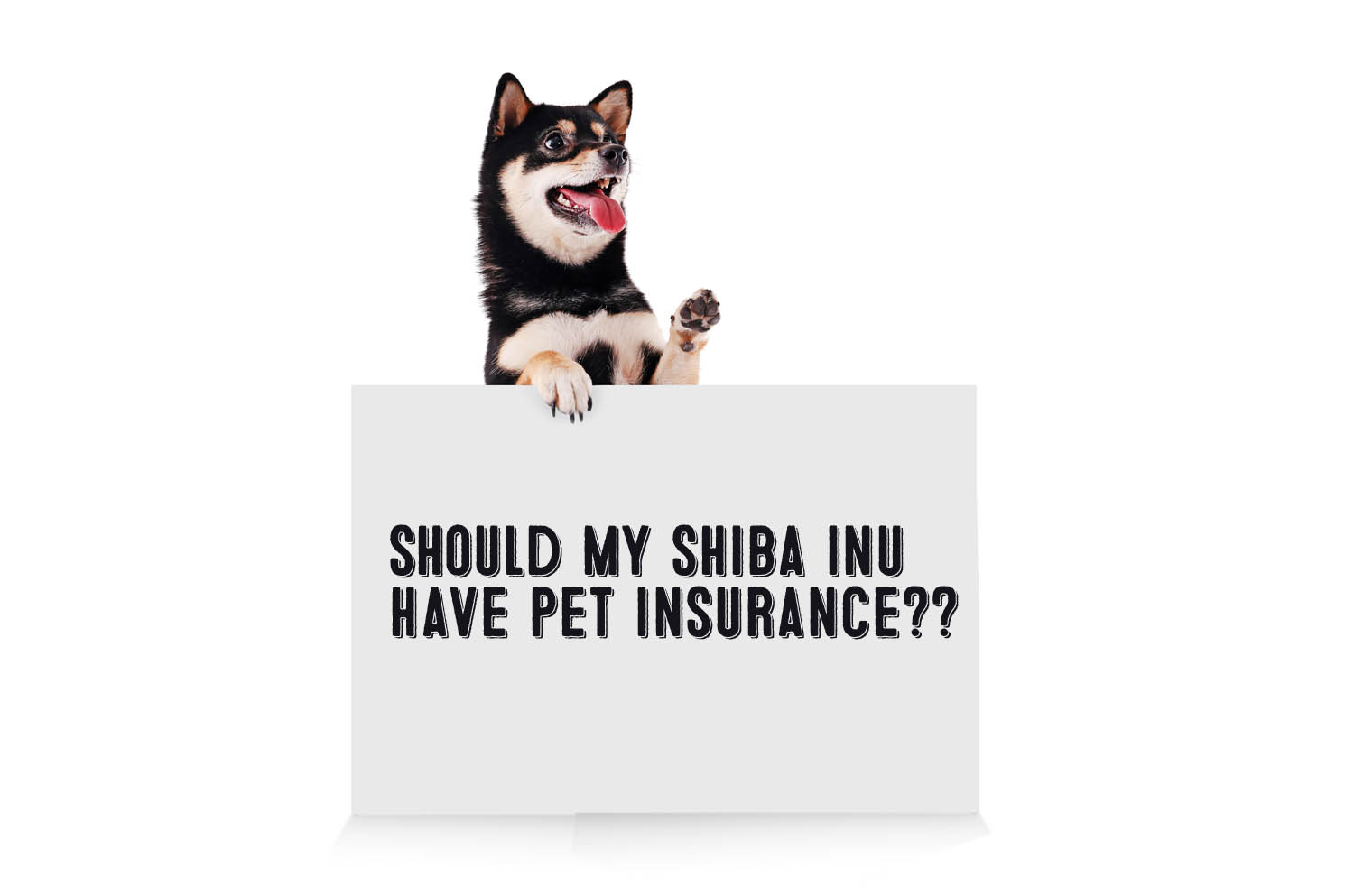 shiba inu pet dog insurance