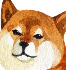focus on shiba inu eyes of drawing