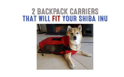 Best Dog Backpack Carrier For Shiba Inus
