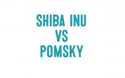 Shiba Inu Vs. Pomsky
