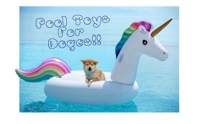 Best Water Toys For Dogs [Doges!]