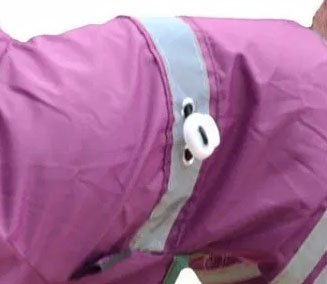 dog raincoat adjustable strap