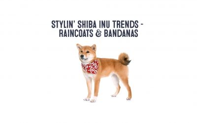 Trending Shiba Inu Fashion – Rain Coats and Bandanas!