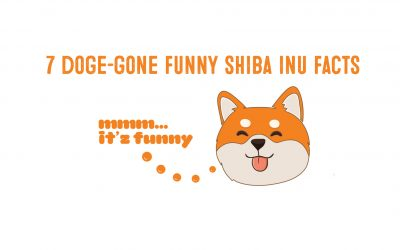 7 Doge Gone Funny Facts About Shiba Inus